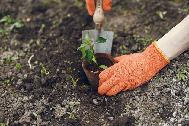 Manos de mujer en guantes plantando plantas jóvenes