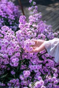Las manos de las mujeres tocan flores púrpuras en los campos