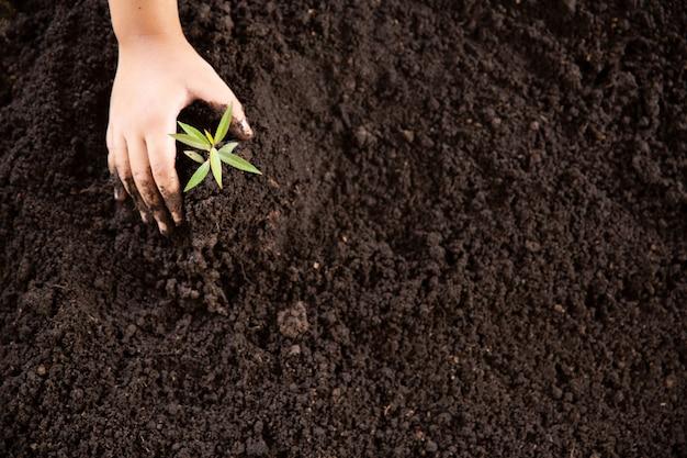 Manos de niño sosteniendo y cuidando una planta verde joven