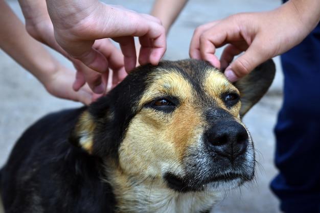 Las manos de los niños y la cabeza de un perro de cerca. refugio de animales
