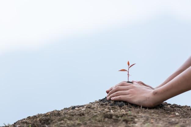 Manos de los niños la plantación de un árbol en el suelo de vuelta como el cuidado y ahorrar concepto wold.
