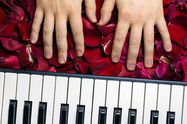 Manos pianistas en pétalos de flor rosa roja. concepto romántico con teclas de piano, vista superior.