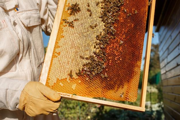 Las manos del primer del apicultor sostienen el marco de madera con el panal.