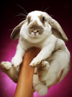 Manos sosteniendo un conejito sobre fondo rosa