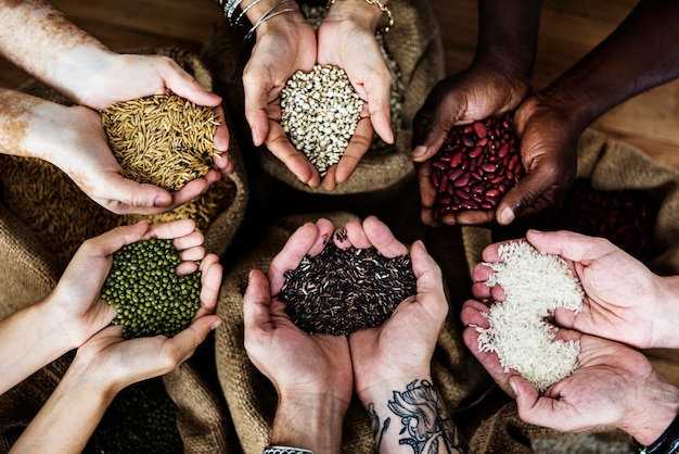 Manos sosteniendo la cosecha de grano fresco
