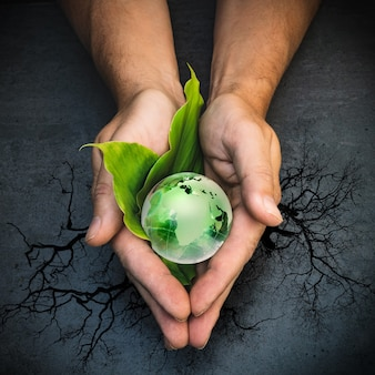 Manos sosteniendo un globo verde del planeta tierra en hojas verdes sobre fondo gris y árbol