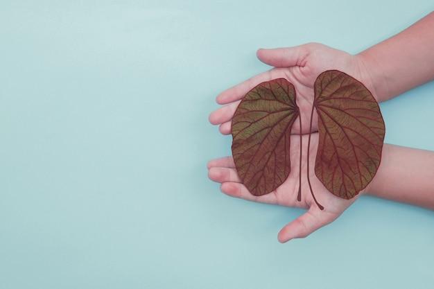Manos sosteniendo hojas en forma de riñón, día mundial del riñón, día nacional del donante de órganos, concepto de donación de caridad