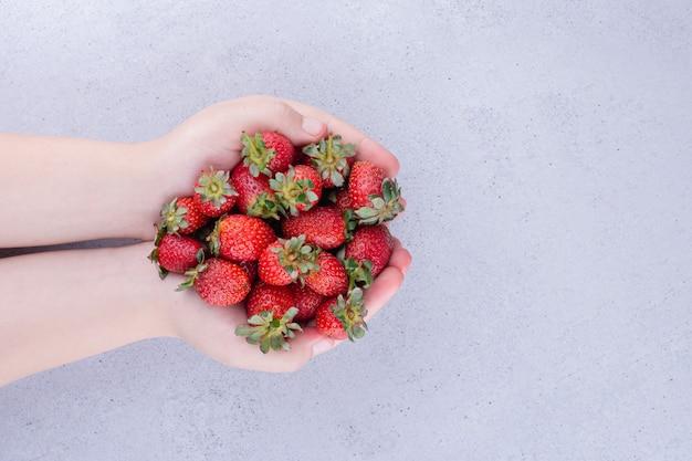 Manos sosteniendo un montón de fresas sobre fondo de mármol. foto de alta calidad