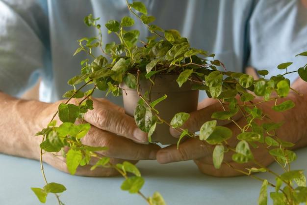 Manos sosteniendo una pequeña planta frondosa verde. fondo. enfoque selectivo.