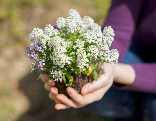 Manos sosteniendo pequeña planta
