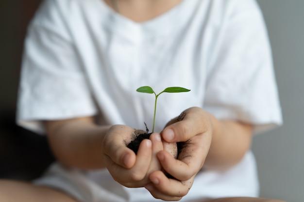 Manos sosteniendo una planta joven verde. día mundial del medio ambiente y manos de los niños. concepto de ecología