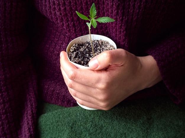 Manos sosteniendo la planta verde joven.