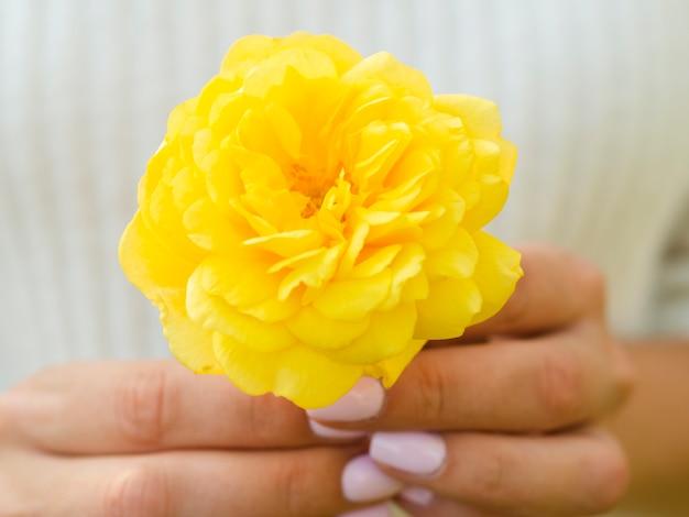 Manos sosteniendo preciosa rosa amarilla