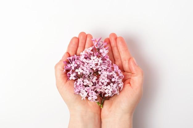Manos sosteniendo una rama de lila aislada