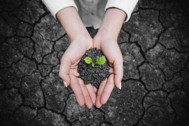 Manos sosteniendo semillas de plantas