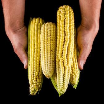Manos sosteniendo vista frontal de la pila de maíz