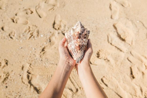 Manos sujetando una caracola en la playa