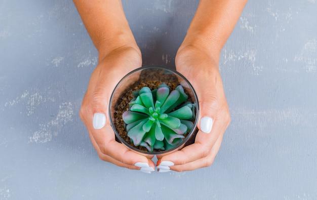 Manos sujetando la planta en maceta de vidrio