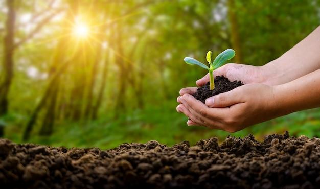 Manos sujetando la planta con tierra