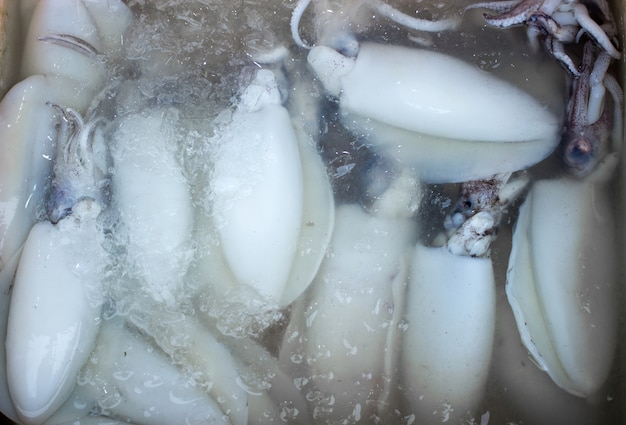 Mantenga fresco preservar sqid en hielo para mariscos