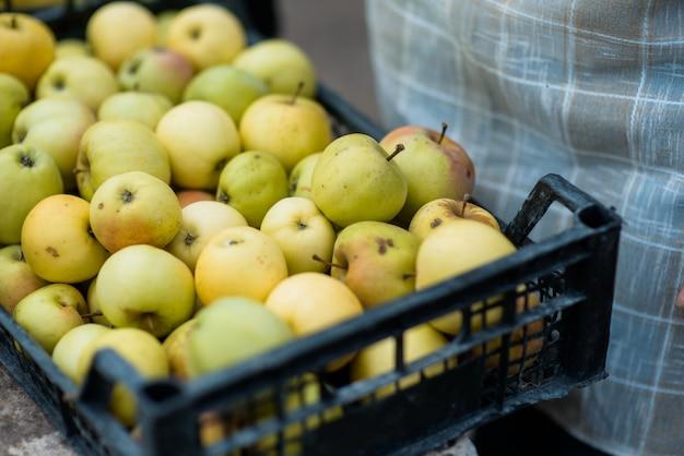 Manzanas amarillas frescas de jardín