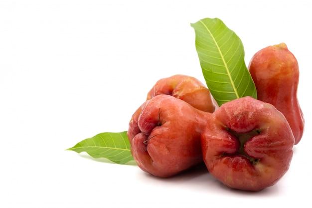 Manzanas de rosa sobre un fondo blanco