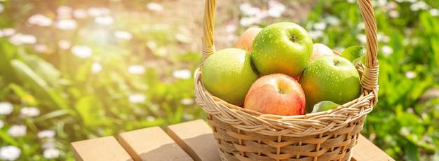 Manzanas verdes y rojas en cesta de mimbre en mesa de madera hierba verde en el jardín tiempo de cosecha bandera horizontal