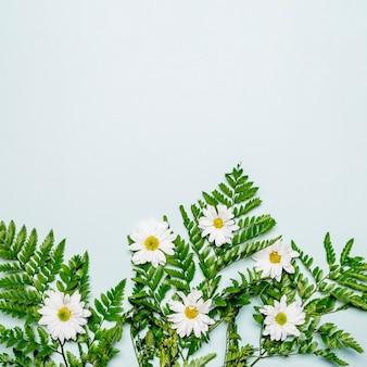 Manzanillas blancas y hojas verdes sobre superficie gris.