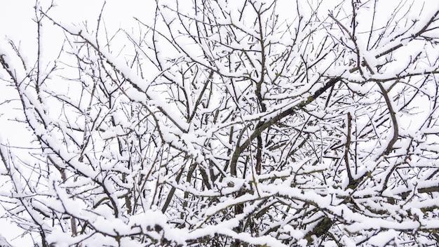 Manzano en la nieve, ramas en la nieve, invierno cubierto de nieve.