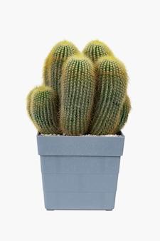 Maqueta de cactus de arena de mar en una maceta