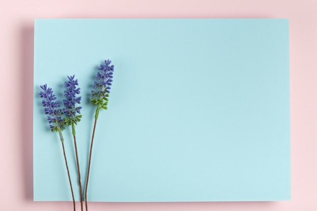 Maqueta de lavanda en rectángulo azul