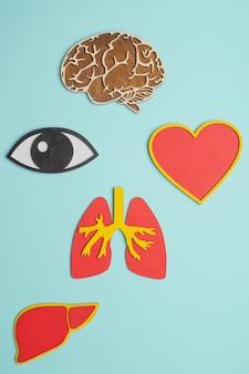 Maqueta de ojos, cerebro, pulmones, corazón e hígado sobre fondo azul.