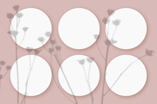 Maqueta con sombras vegetales superpuestas en 6 hojas redondas de papel blanco texturizado sobre un fondo de mesa rosa.