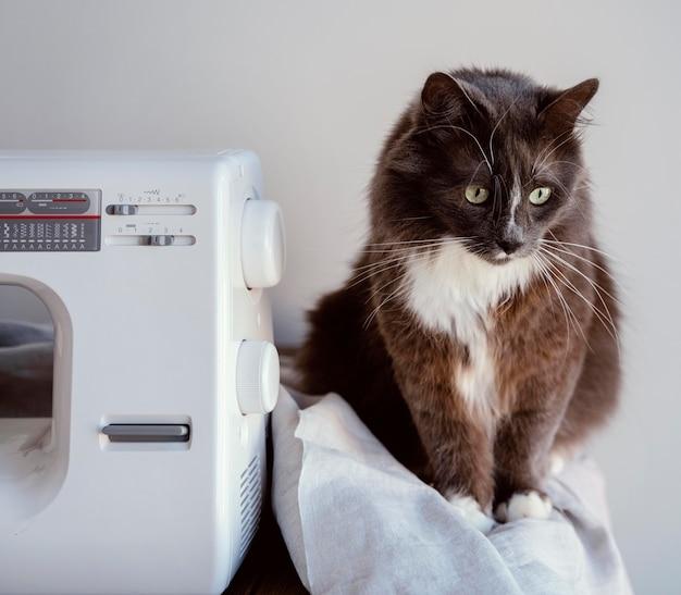 Máquina de coser y vista frontal del gato.