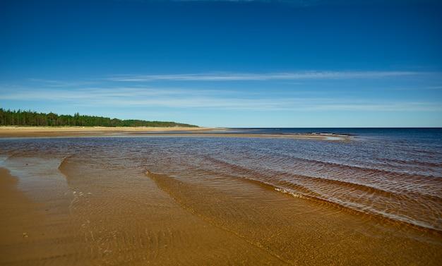 Mar blanco, rusia. costa arenosa de la costa sur