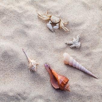 El mar descasca las estrellas de mar y el cangrejo en la arena de la playa para el concepto del verano y de la playa.