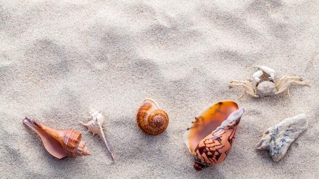 El mar descasca las estrellas de mar y el cangrejo en la arena de la playa.