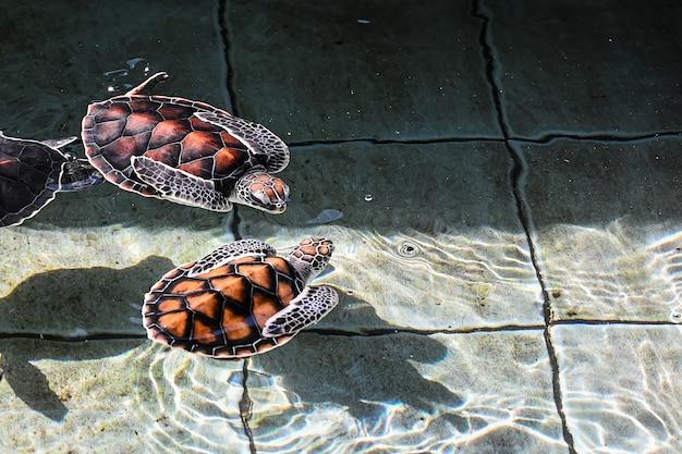 Mar de tortuga en el acuario de tailandia.