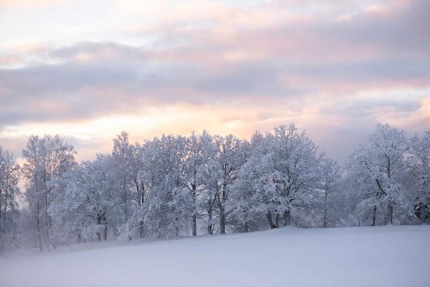 Las maravillas de invierno