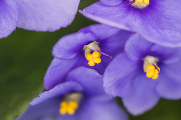 Maravillosas flores púrpuras exóticas
