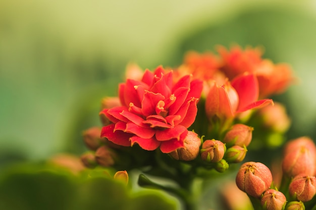 Maravillosas flores rojas exóticas