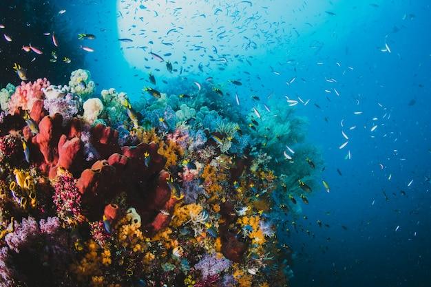 Maravilloso paisaje marino de peces sobre los arrecifes de coral