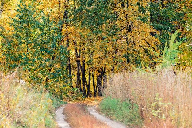Maravilloso paisaje de otoño con hojas multicolores.
