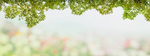 El marco abstracto del verde deja el árbol en el jardín de la falta de definición.