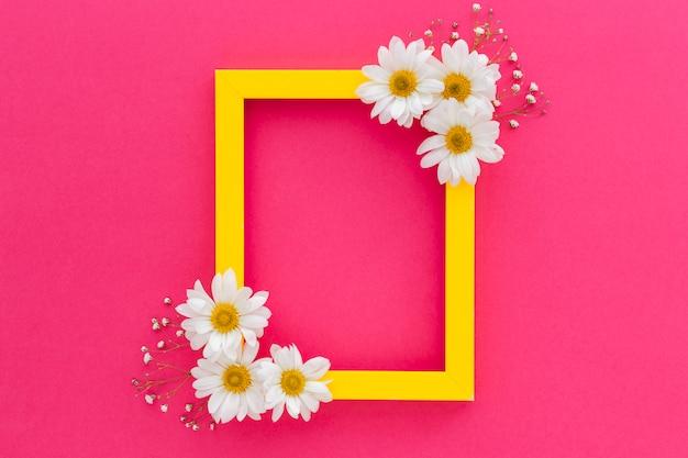 Marco amarillo decorado con margarita blanca y flores de aliento de bebé sobre la superficie rosa