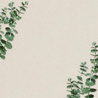 Marco de borde de eucalipto sobre fondo beige