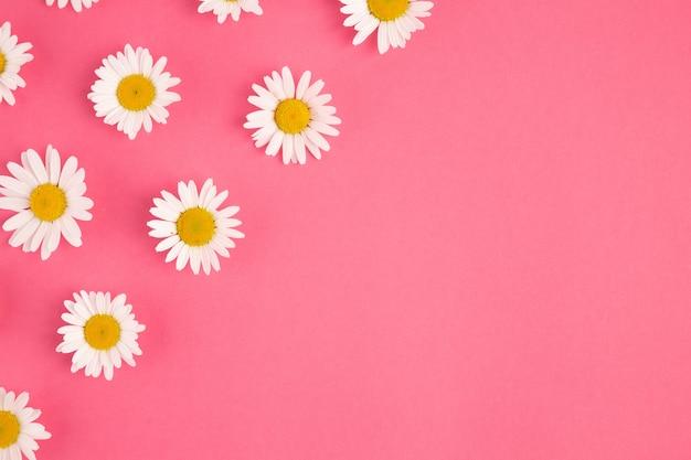 Marco de borde de manzanilla plano yacía sobre fondo abstracto rosa pastel con espacio de copia