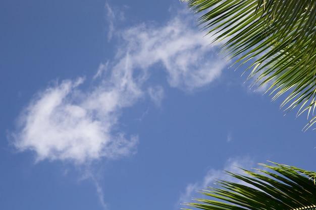Marco con un cielo azul y hojas de palma
