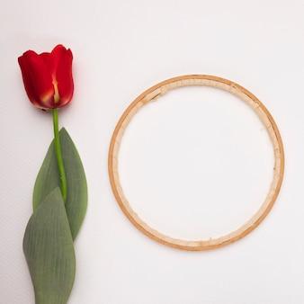 Marco circular de madera cerca del tulipán rojo sobre fondo blanco.