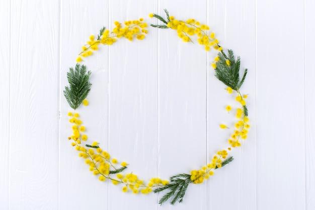 Marco de círculo de mimosa sobre fondo blanco. espacio para texto. fondo floral